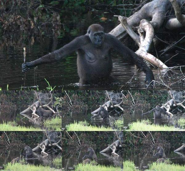 Теория Дарвина и ее альтернативы